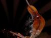 Gass Ziade - Violin Soul